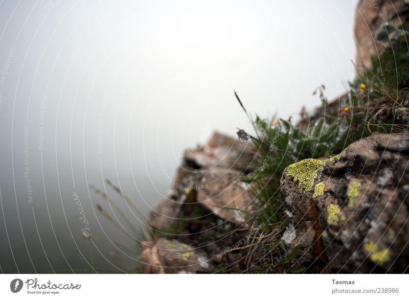 Flora Helvetica Natur Pflanze Erholung Blume Gras Felsen Nebel Urelemente Moos Wildpflanze