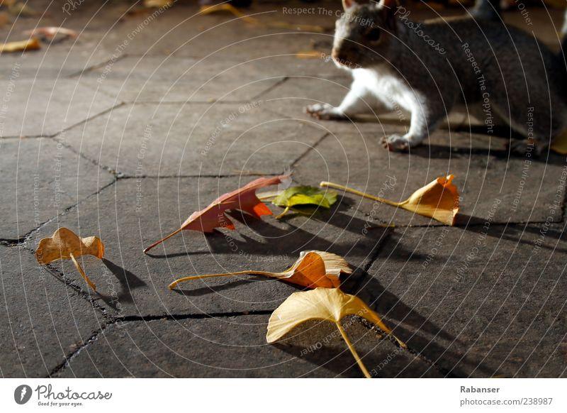 Verlaufen Natur schön Pflanze Blatt Tier Farbe gelb Herbst Stimmung gehen Angst Wildtier ästhetisch Fell Tiergesicht Herbstlaub