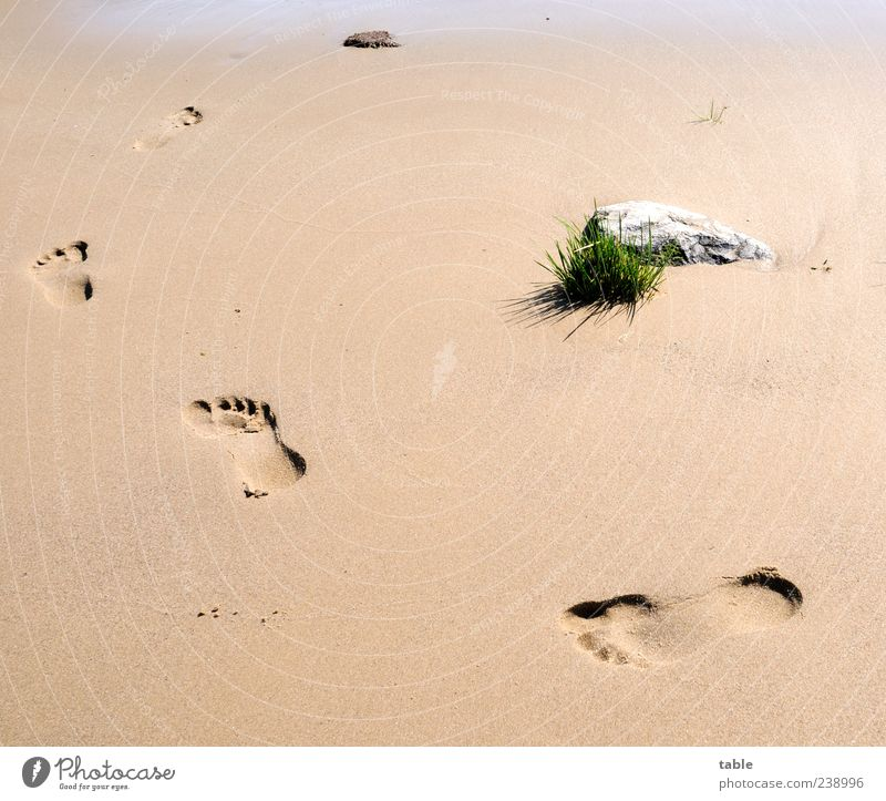 walk around Mensch Natur Ferien & Urlaub & Reisen Pflanze Sommer Strand Erholung Umwelt Gras Wege & Pfade Küste Sand Stein Zufriedenheit laufen natürlich