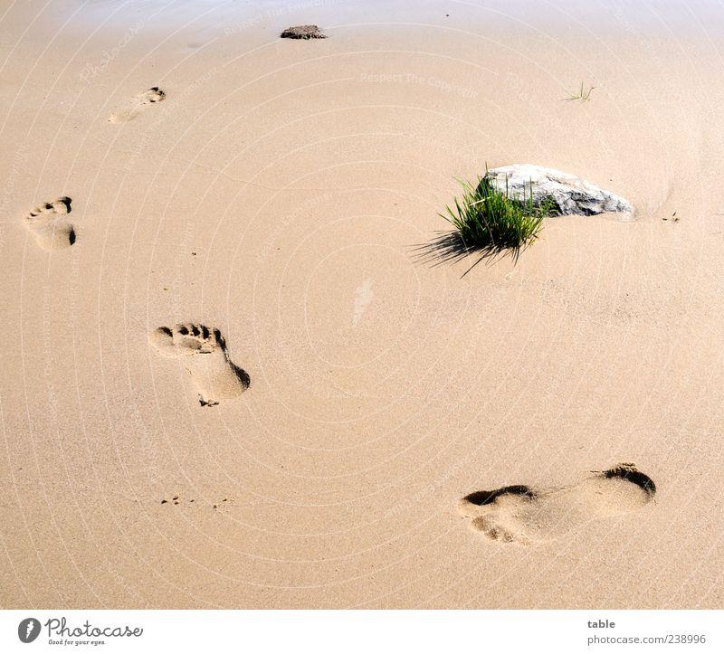 walk around Wohlgefühl Zufriedenheit Ferien & Urlaub & Reisen Sommer Sommerurlaub Strand Mensch Fußspur Umwelt Natur Sand Schönes Wetter Pflanze Gras Küste
