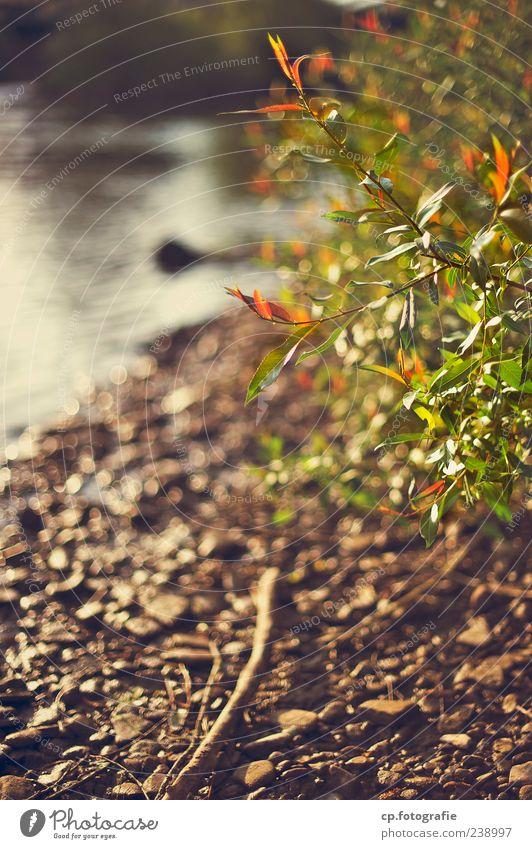 Ufer Natur grün Pflanze Sommer Herbst Frühling Stein See orange natürlich Sträucher Schönes Wetter Fluss Seeufer Flussufer Bach