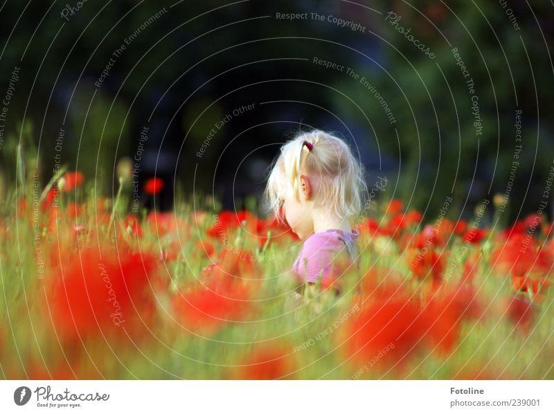 St. Particula-Day Mensch Kind Mädchen Kindheit Kopf Haare & Frisuren Umwelt Natur Landschaft Pflanze Sommer Blume Blüte Wiese Feld hell natürlich Wärme grün rot