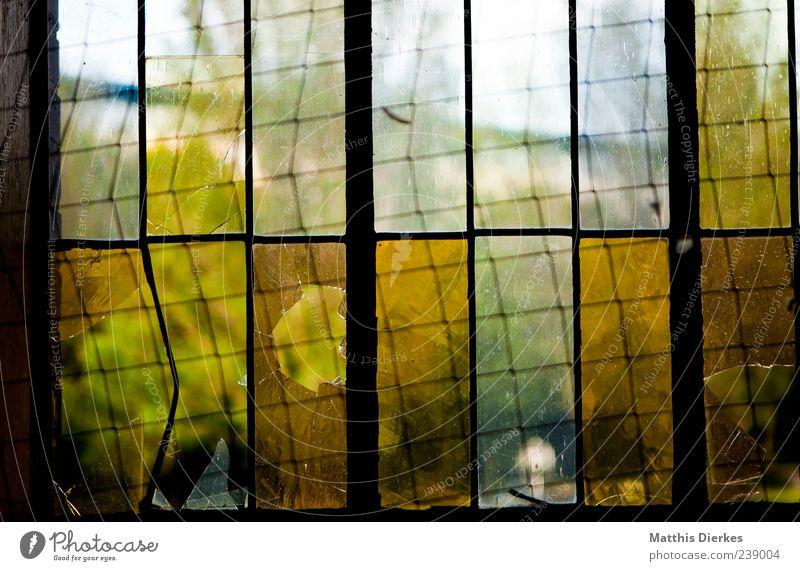 Tris.tesse alt grün gelb Fenster Architektur Traurigkeit Glas gold ästhetisch kaputt trist Trauer Industriefotografie Fabrik verfallen gruselig