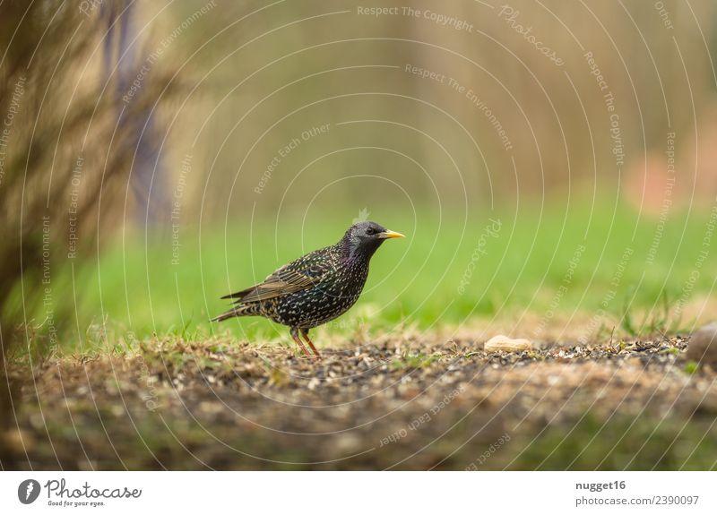 Star Umwelt Natur Pflanze Tier Frühling Sommer Herbst Klima Wetter Schönes Wetter Gras Sträucher Garten Park Wiese Feld Wildtier Vogel Tiergesicht Flügel
