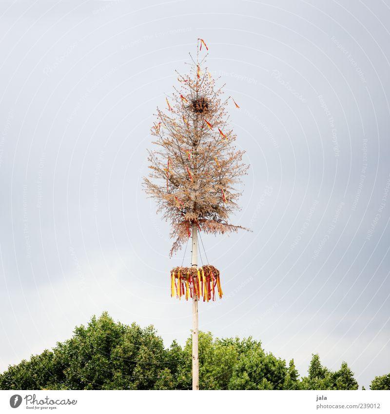 mai Himmel Natur blau grün Baum Pflanze Frühling Feste & Feiern trist Grünpflanze Maibaum