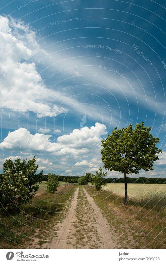 weg ins blaue. Natur Landschaft Erde Himmel Wolken Schönes Wetter Wind Baum Sträucher Nutzpflanze Feld Straße Wege & Pfade weiß ruhig Hoffnung Horizont