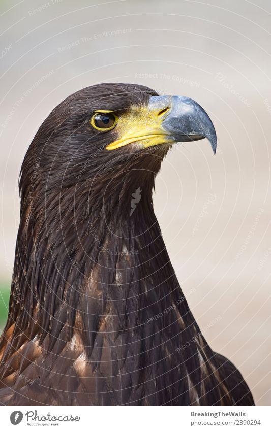 Natur Tier dunkel Vogel grau braun wild gold Wildtier beobachten Wachsamkeit Zoo Schnabel Tiergesicht Adler Beute