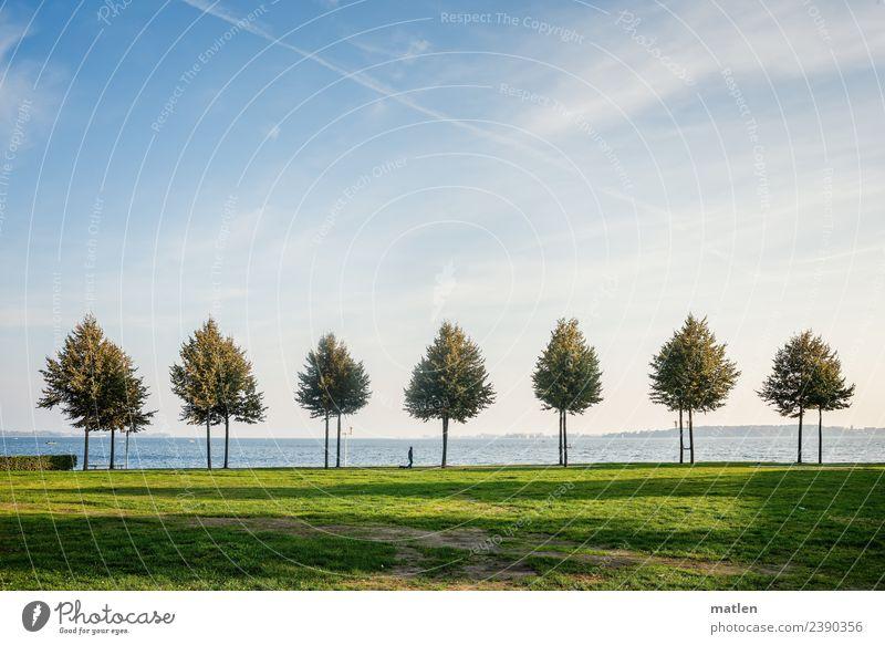7 Bäume Landschaft Pflanze Himmel Wolken Horizont Herbst Schönes Wetter Baum Gras Wiese Küste Ostsee laufen blau grün weiß Allee Spaziergang Hund Gassi gehen