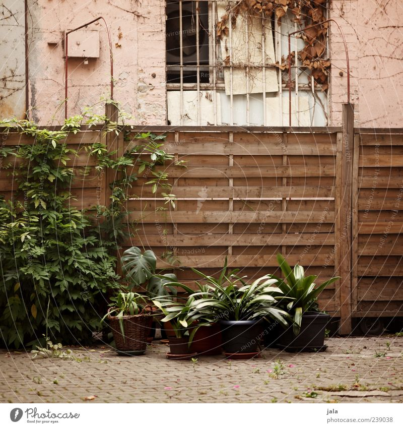 hof Pflanze Sträucher Grünpflanze Topfpflanze Haus Bauwerk Gebäude Fenster Zaun trist Hof Farbfoto Außenaufnahme Menschenleer Tag Gitter Hinterhof Holzzaun
