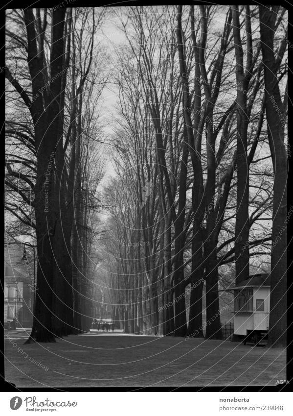 Wintertag Natur alt weiß schön Baum Winter schwarz ruhig Ferne Gefühle Wege & Pfade Menschengruppe Park Stimmung gehen groß
