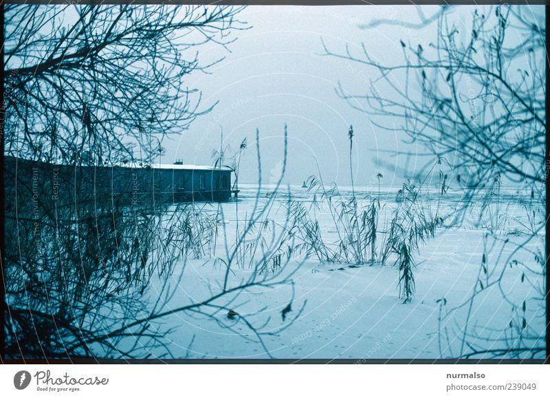 echt Trist IV Ferne Umwelt Natur Landschaft Winter Eis Frost Schnee Schilfrohr Küste Flussufer Havel Wasserfahrzeug Hausboot dunkel kalt ruhig gefroren