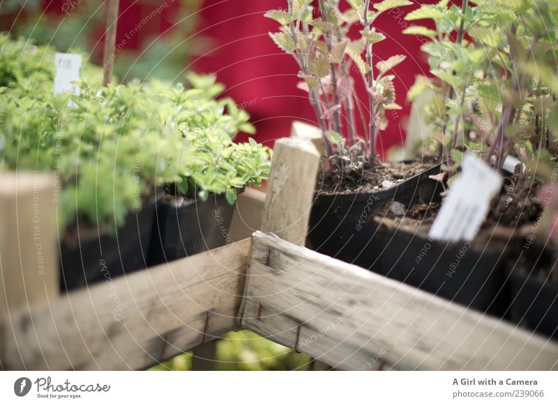 für den Kräutergarten Natur grün Pflanze Blume Frühling Garten Gesundheit Wachstum Kochen & Garen & Backen Kräuter & Gewürze Sammlung Duft Blumentopf einrichten