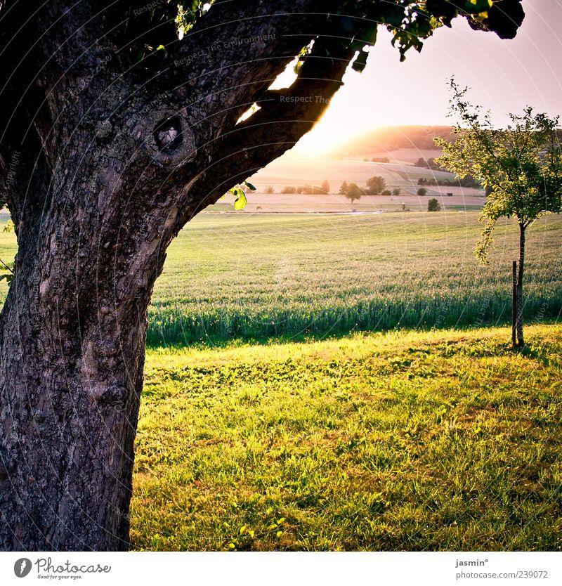 Dämmerung Natur Baum Sonne Ferne Umwelt Landschaft Wiese Wärme Frühling hell Wetter Feld Schönes Wetter Weide Baumstamm Pflanze