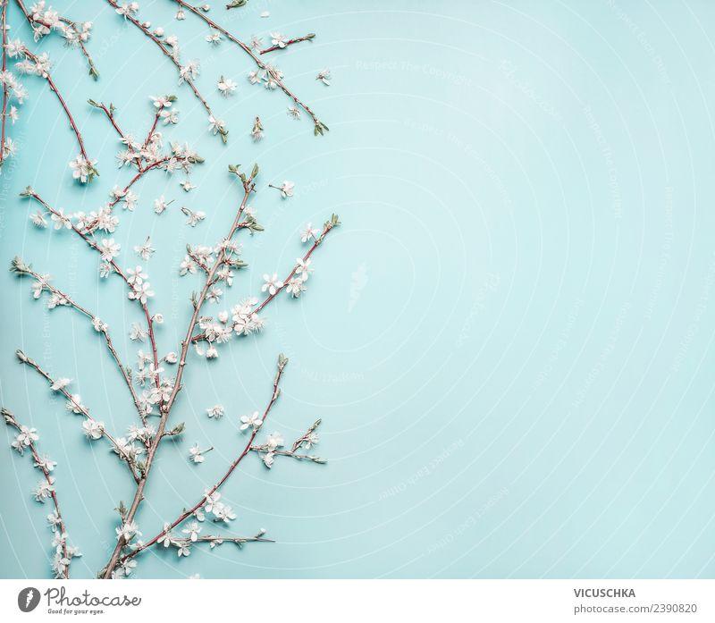 Zarte Frühlingsblüten auf hell blau Hintergrund Stil Design Natur Pflanze Blume Blatt Blüte Dekoration & Verzierung Blumenstrauß Fahne Hintergrundbild Entwurf