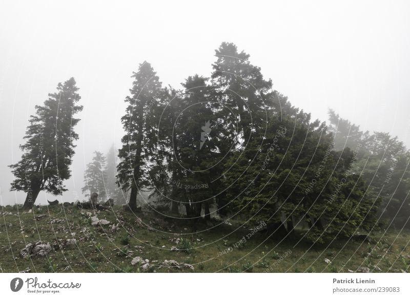 green and grey Natur Baum Pflanze Wald Erholung Umwelt Landschaft Wiese kalt grau Luft Stimmung Wetter Wind Nebel Urelemente