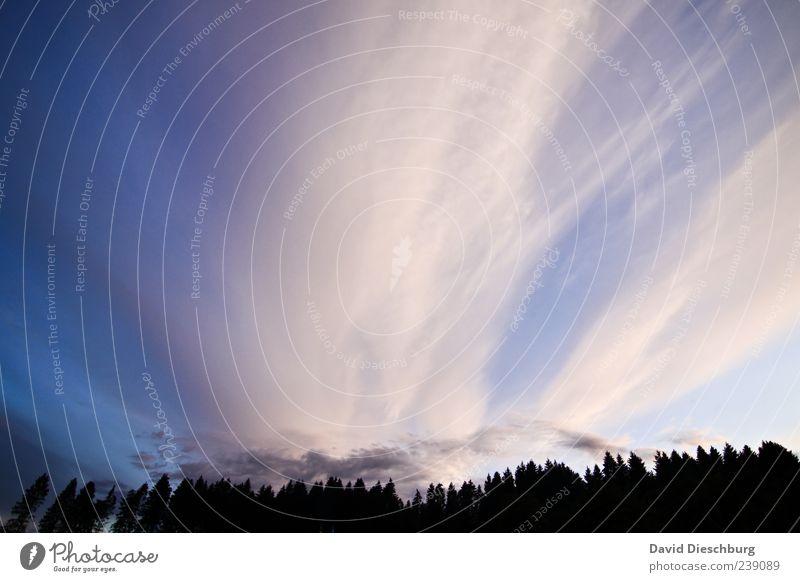 Windy days Natur Landschaft Luft Himmel Wolken Sommer Pflanze Baum Grünpflanze Wald Urwald blau schwarz weiß Tanne Nadelwald Wolkenhimmel Wolkendecke schön