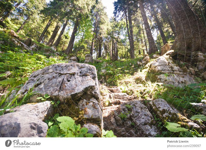 Es war einmal... Natur Ferien & Urlaub & Reisen Baum Pflanze Sommer Blume Wald Umwelt Landschaft Berge u. Gebirge Frühling Freiheit Wetter Felsen