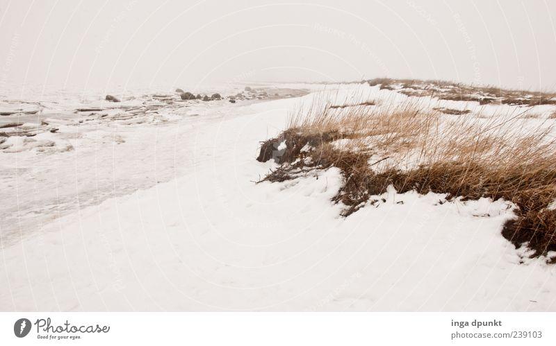 Winterstrand Natur Ferien & Urlaub & Reisen Pflanze Meer Strand Ferne Umwelt Landschaft kalt Schnee Gras Küste Eis Wind Klima