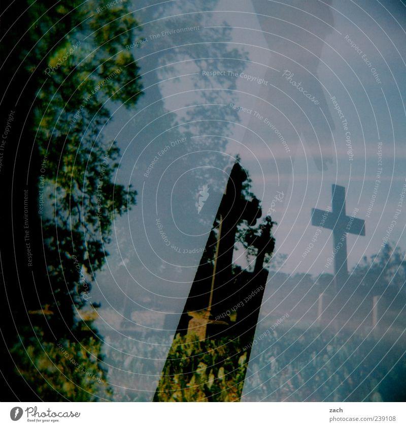 Ende blau alt grün Pflanze Baum dunkel Traurigkeit Tod Religion & Glaube Stein Angst Kirche bedrohlich Ewigkeit Zeichen Trauer