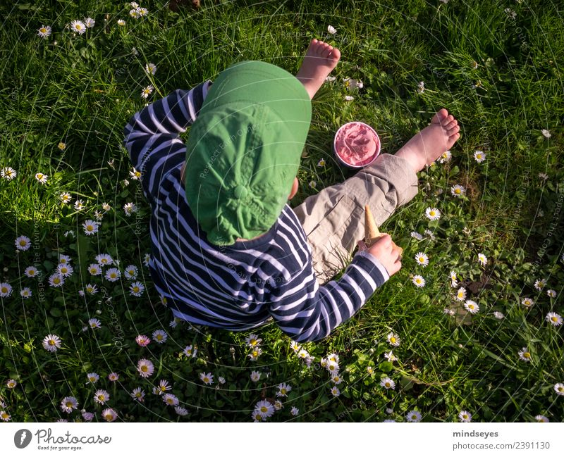Kleiner Junge sitzt auf Blumenwiese mit Erdbeereis Sommer Mensch maskulin Kleinkind Kindheit 1 1-3 Jahre Schönes Wetter Gänseblümchen Wiese Park Garten
