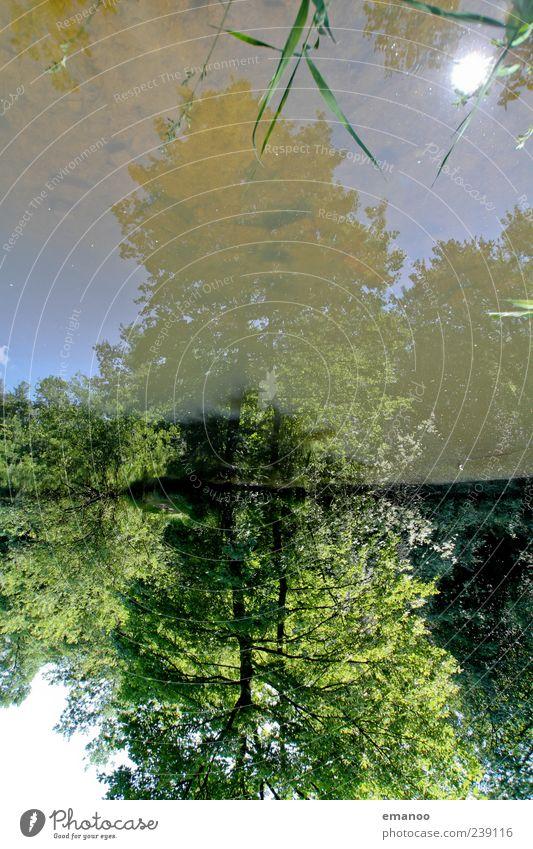 Spiegelweiher Erholung Ferien & Urlaub & Reisen Ausflug Sommer Umwelt Natur Landschaft Pflanze Wasser Himmel Klima Wetter Baum Sträucher Park Wald Seeufer Teich