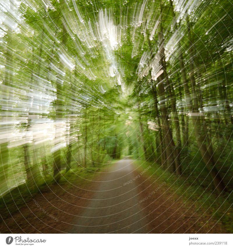 Tunnel Natur Wald Wege & Pfade Geschwindigkeit braun grün Fußweg Farbfoto Außenaufnahme Experiment Menschenleer Licht Schatten Langzeitbelichtung