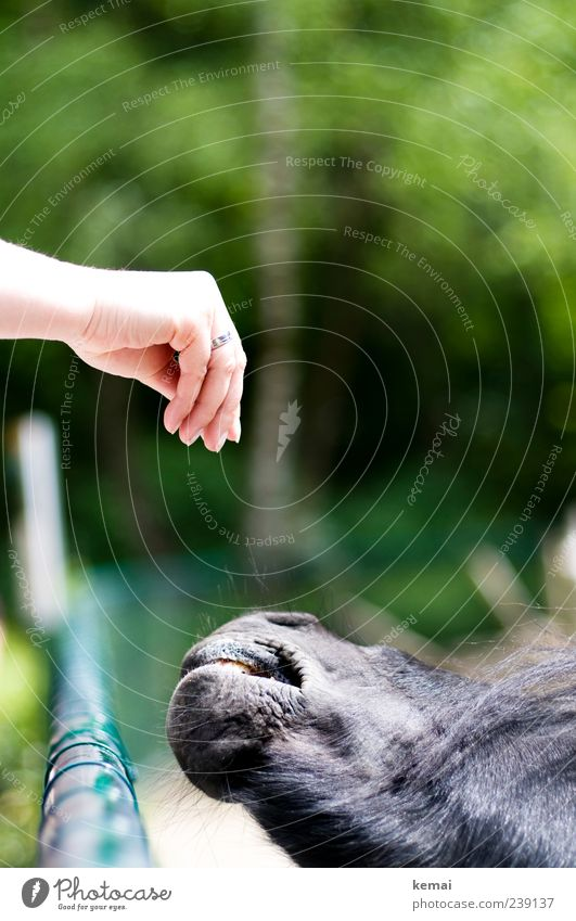 Füttern Natur Hand grün Tier Kopf Park Finger Pferd Vertrauen Zoo Zaun Appetit & Hunger Ponys füttern Schnauze Nutztier