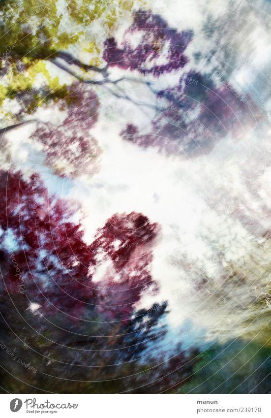 moving focus Natur Baum Sträucher Blatt Zweige u. Äste Park Wald außergewöhnlich exotisch fantastisch bizarr Design Kreativität Kunst Surrealismus Farbfoto