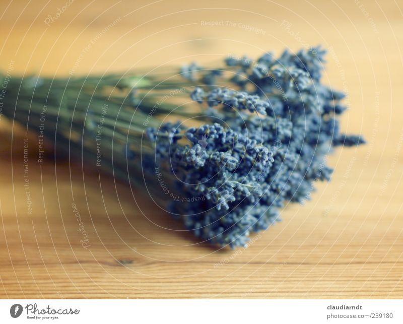 dufte! Natur Pflanze Blume Nutzpflanze Lavendel Heilpflanzen Trockenblume Blühend Duft schön trocken violett beruhigend Holz Holztisch Blumenstrauß Farbfoto