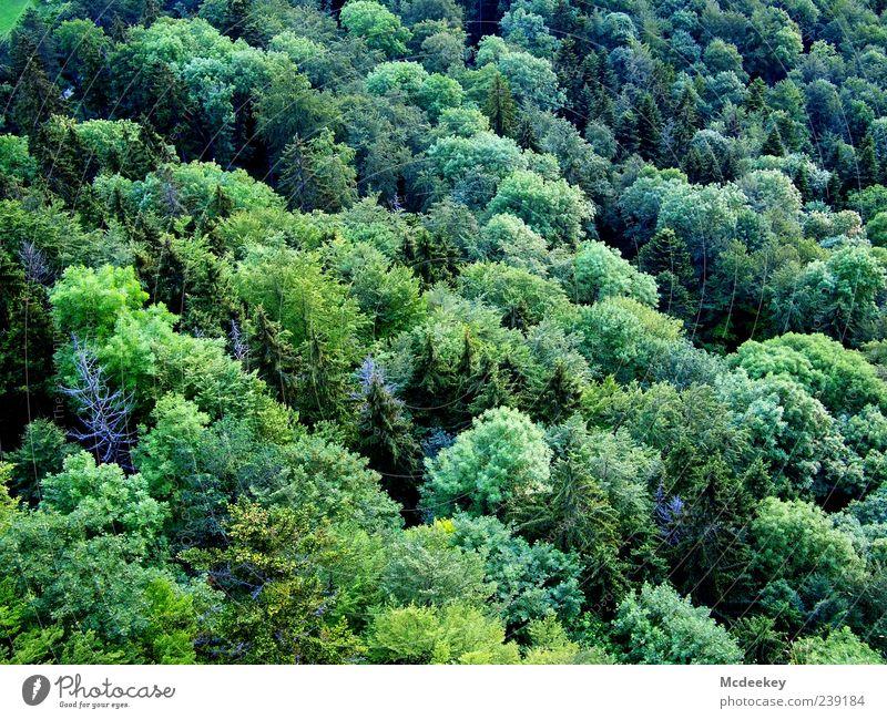 Mix it Baby! Natur Landschaft Pflanze Sommer Schönes Wetter Baum Sträucher Grünpflanze Wald Tanne Mischwald dunkel Unendlichkeit blau gelb grün schwarz weiß