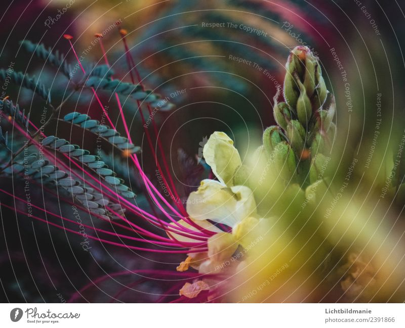 Mittelmeer Blüte Natur Pflanze Frühling Sommer Blume Sträucher Kaktus Orchidee exotisch Kapernstrauch Farn Garten Park Urwald Blühend Wachstum ästhetisch