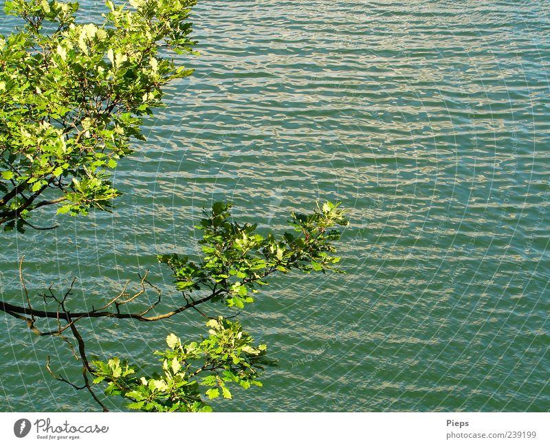 Little Part of Perfect Day Natur Wasser grün Ferien & Urlaub & Reisen Baum Pflanze Sommer Erholung Landschaft See Wellen einzigartig Ast Eiche Jahreszeiten Erholungsgebiet