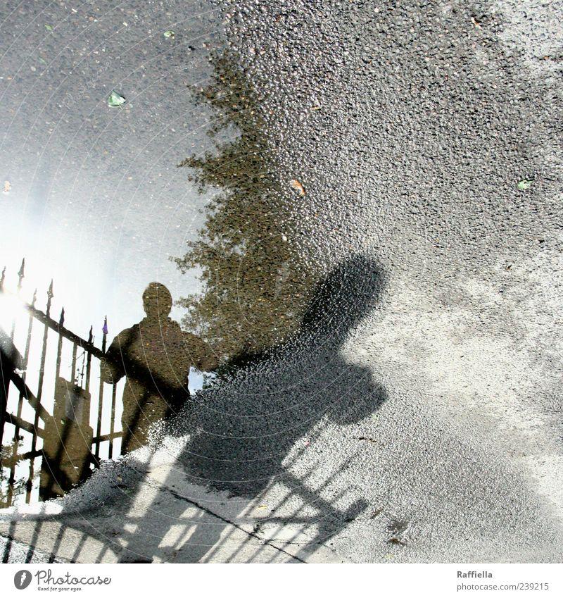 Zwiegespalten l Köln Mann Erwachsene Straße Asphalt stehen grau Verzerrung Pfütze Zaun Spitze Baum Spiegelbild Farbfoto Außenaufnahme Licht Schatten Silhouette