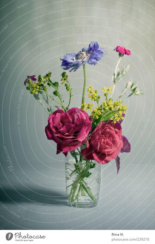 SommerBlumenStrauß Blühend natürlich schön mehrfarbig Glas Wasserglas Blumenstrauß Sommerblumen Rose Stillleben Farbfoto Innenaufnahme Menschenleer