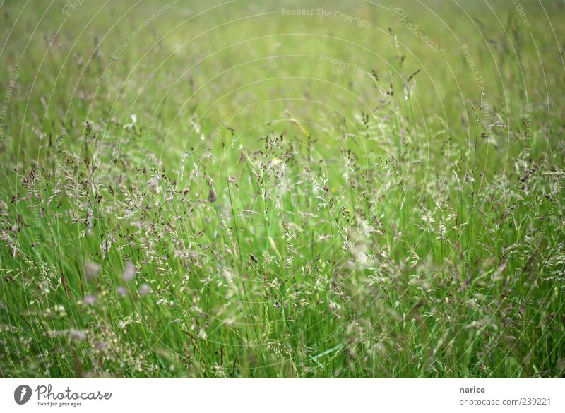 confused gras Natur grün Pflanze Sommer Umwelt Wiese Gras Bewegung frisch Sträucher Blühend Grünpflanze Gräserblüte