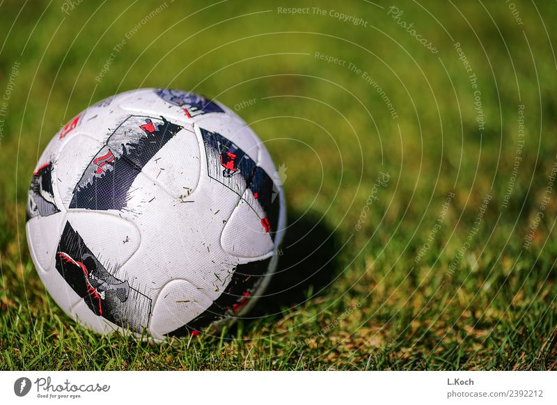 Das runde muss in`s eckige sportlich Fitness Spielen Sport Ballsport Fußball Fußballplatz grün Leidenschaft Team Teamwork Fusball Rasen grüner rasen