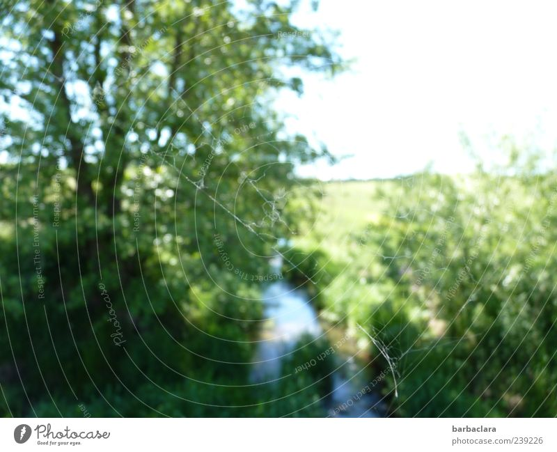Aus der Sicht einer Spinne Himmel Natur blau Wasser grün Baum Pflanze Sommer ruhig Wiese hell Stimmung natürlich frei authentisch Sträucher