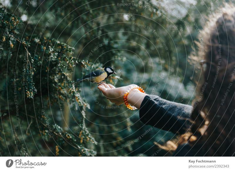 Kohlmeise pickt Futter aus der Hand einer jungen Frau Freude Junge Frau Jugendliche 1 Mensch 18-30 Jahre Erwachsene Natur Frühling Herbst Baum Park Wald Tier