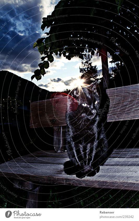 Ganz in SCHWARZ Haustier Katze Tiergesicht Fell glänzend sitzen dunkel gruselig Bank schwarz Säugetier Farbfoto Außenaufnahme Menschenleer Textfreiraum oben