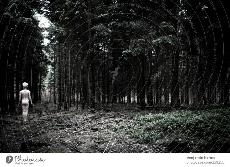 ein männlein... Mensch Jugendliche Baum Pflanze ruhig Erwachsene Wald dunkel kalt nackt Körper Kraft natürlich maskulin frei Junger Mann