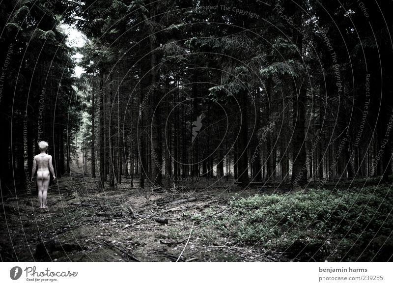 ein männlein... Mensch maskulin Junger Mann Jugendliche Körper 1 18-30 Jahre Erwachsene Pflanze Baum Wald stehen dunkel frei kalt nackt natürlich trist Kraft