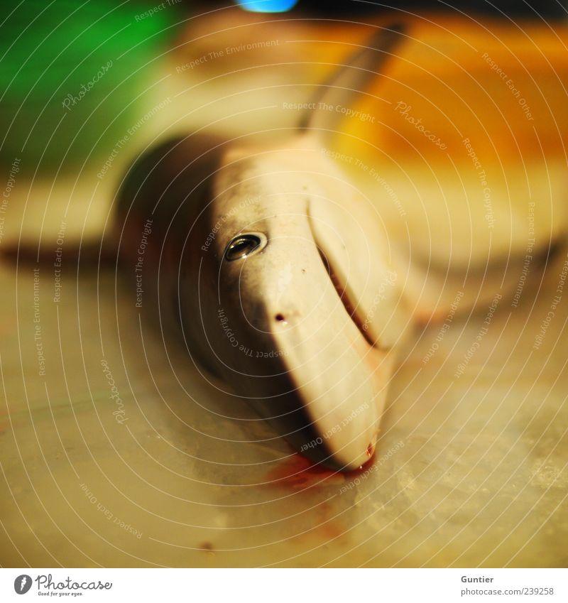 zum Frühstück,... Wildtier Fisch Haifisch 1 Tier gelb grau grün schwarz weiß Tod gefangen Fischereiwirtschaft Auge Nase Nasenloch Fischmarkt Fischmaul Handel