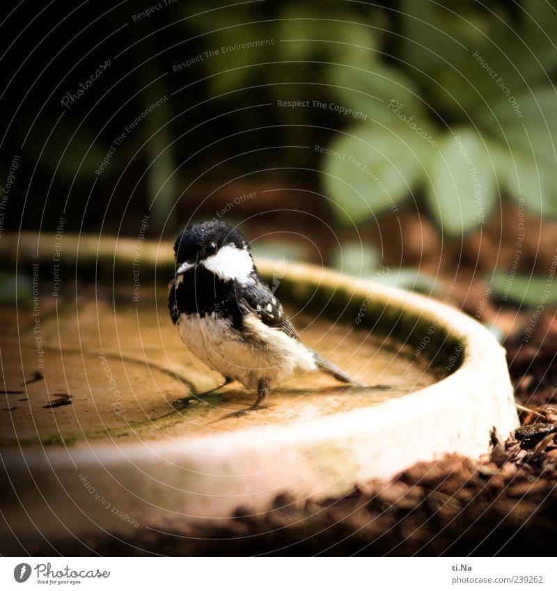 *Piep* ich hab ne Meise Natur Wasser weiß grün rot Pflanze Sommer Tier schwarz Umwelt Frühling klein Vogel Schwimmen & Baden Wildtier nass