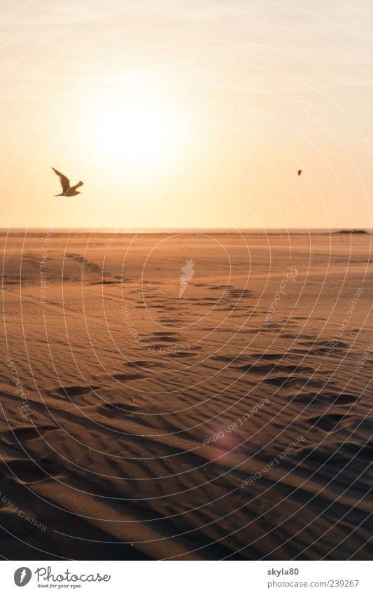 Lebensweg Strand Meer Küste flach Ferien & Urlaub & Reisen Tourismus Erholung Sand glänzend Sonne Schatten Glück Freiheit Niederlande Nordsee Wattenmeer Ebbe