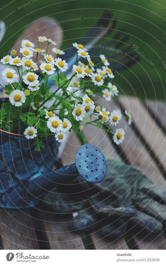 Natur Pflanze Sommer Blume natürlich Garten Freizeit & Hobby Dekoration & Verzierung Wachstum frisch Tisch Kräuter & Gewürze Jahreszeiten Bauernhof Stillleben