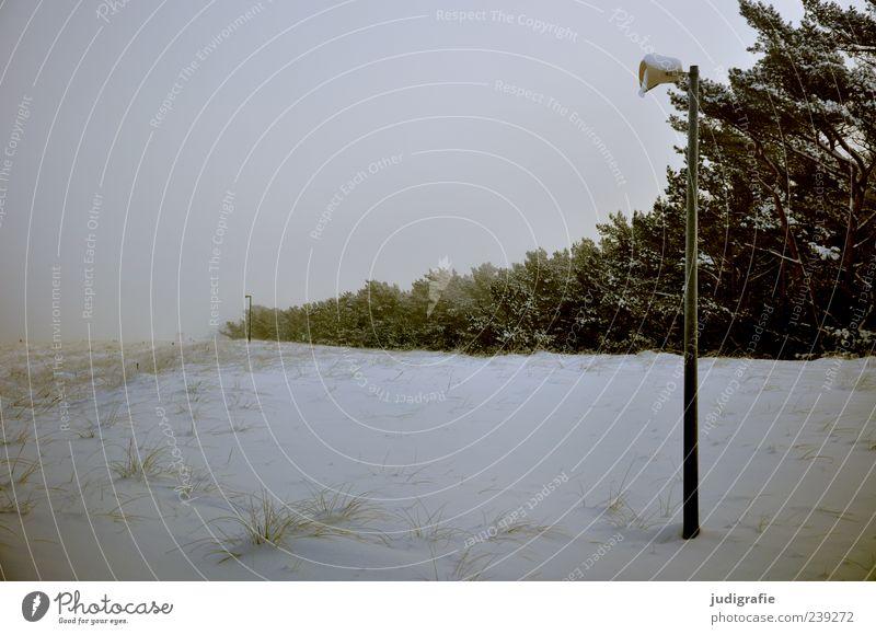 Ostseewinter Umwelt Natur Landschaft Winter Klima Schnee Pflanze Baum Küste dunkel kalt Darß Prerow Lautsprecher Stranddüne Farbfoto Gedeckte Farben