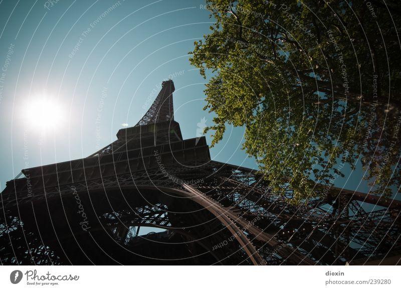 Dans le Parc du Champ de Mars Ferien & Urlaub & Reisen Tourismus Sightseeing Städtereise Himmel Wolkenloser Himmel Sommer Schönes Wetter Baum Blatt Grünpflanze