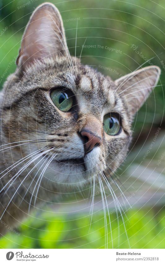 Fischfutter   sie mag Fische Katze Natur schön grün ruhig Leben Umwelt grau springen elegant ästhetisch laufen warten entdecken Wellness Klettern
