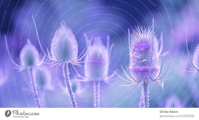 Disteln elegant Design Wellness Leben harmonisch Wohlgefühl Zufriedenheit Erholung ruhig Meditation Dekoration & Verzierung Tapete Natur Pflanze Sommer Herbst