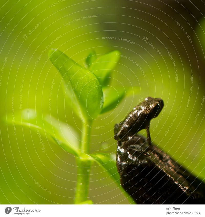 Turnpause grün Pflanze Blatt Tier klein lustig Tierjunges sitzen niedlich Frosch Aquarium hocken Grünpflanze winzig Makroaufnahme Farbe